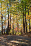 人行道在湖罗利, NC约翰逊公园  图库摄影