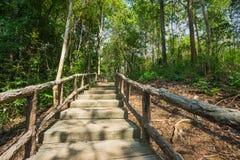 人行道穿过森林公园 免版税库存图片