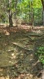 人行道约克河国家公园弗吉尼亚 库存图片