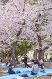 人观看的樱花和放松在佐仓节日a 库存照片
