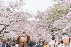 人观看的樱花和放松在佐仓节日a 免版税库存照片