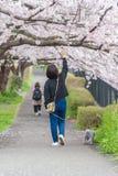 人观看的樱花和放松在立川市公园, T 图库摄影