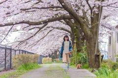 人观看的樱花和放松在立川市公园, T 免版税库存图片