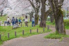 人观看的樱花和放松在立川市公园, T 库存照片