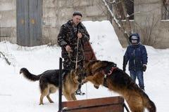 人训练德国牧羊犬,冬天,社论 免版税库存照片