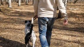 人走与狗在秋天公园晴天 供以人员走与一条达尔马希亚狗,从后面的看法 库存图片