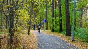 人跑乘驾在沥青轨道骑自行车在桦树公园的人 影视素材