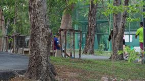 人跑孩子,成人的长辈,跑步和步行在公园 股票录像
