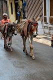 人运输在骡子的物品在狭窄的街道拉合尔巴基斯坦 免版税库存照片