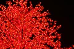 人造光结构树 库存照片