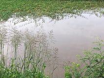 人造池塘 库存照片