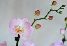 人造花,兰花植物 免版税库存图片