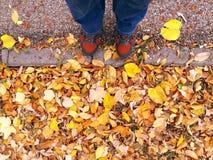 人醒来在五颜六色的叶子的-秋天在森林里 免版税库存照片
