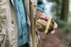 人采摘蘑菇在秋天森林里 免版税库存照片