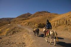 人骑乘马通过山路 库存图片