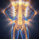 人骨头造影扫描图象 库存照片