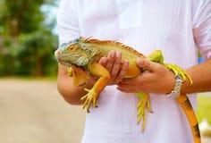 年轻人,拿着五颜六色的鬣鳞蜥爬行动物的爬虫学家 免版税库存图片