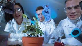 人滴下的化学制品在植物中 股票录像