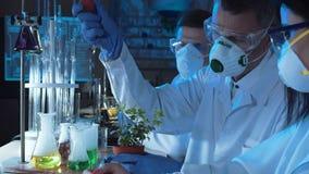 人滴下的化学制品在植物中 股票视频