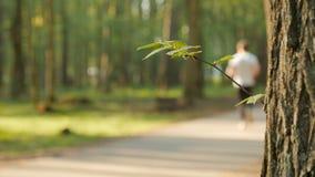 人活动被弄脏的背景在有bokeh、春天和夏季的公园 股票录像