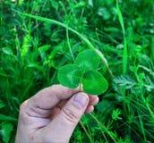 人们和植物群 免版税库存图片