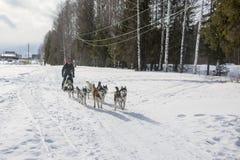 人们和狗在冬天名字的结尾的庆祝时 库存照片