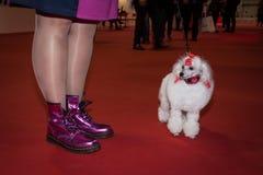 人们和狗在国际性组织尾随米兰,意大利的陈列 库存图片