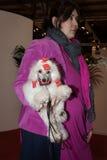 人们和狗在国际性组织尾随米兰,意大利的陈列 库存照片