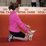 人们和狗在国际性组织尾随米兰,意大利的陈列 免版税库存图片