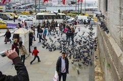 人们和鸽子在新的清真寺庭院附近 免版税库存图片