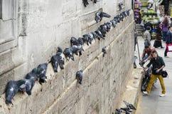 人们和鸽子在新的清真寺庭院附近 免版税库存照片