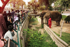 人们喂养一头大象SUZI 免版税库存照片