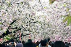 人们在上野公园,东京享用樱花(佐仓) 免版税库存照片