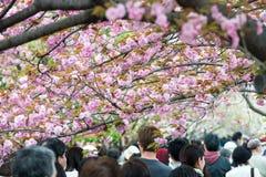 人们在上野公园,东京享用樱花(佐仓) 库存图片