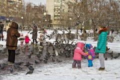 人们在冬天喂养鸽子 库存图片