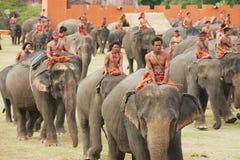 人们在大象展示在素林,泰国参与 免版税库存照片