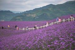 人们在形成淡紫色领域公园 免版税图库摄影