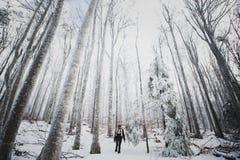 人们在有雾的森林里 免版税库存图片