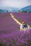 人们在淡紫色领域公园 免版税库存图片