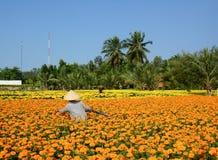 人们在湄公河三角洲的花田,越南南方工作 库存图片