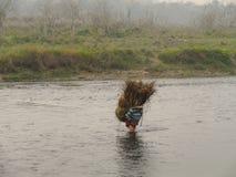人们在草季节Chitwan国家公园尼泊尔以后运载草 免版税图库摄影