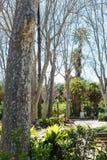 人们在Bellini庭院里在卡塔尼亚,西西里岛 库存图片