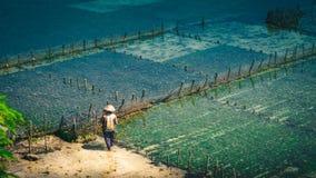 人们收集海草种植园海藻-努沙Penida,巴厘岛,印度尼西亚 库存图片