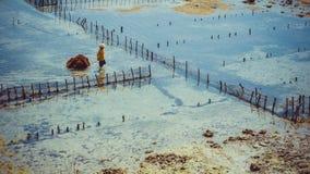 人们收集海草种植园海藻-努沙Penida,巴厘岛,印度尼西亚 图库摄影