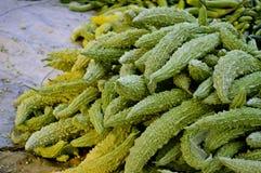 苦涩金瓜在印第安农村市场上 免版税库存照片