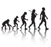 人类演变 库存图片