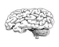 人类生物学,器官解剖学例证 刻记手拉在老剪影和葡萄酒样式 身体详细的脑子或 库存例证