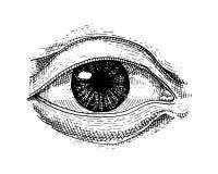 人类生物学,器官解剖学例证 刻记手拉在老剪影和葡萄酒样式 面孔详细的眼睛或 库存图片