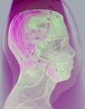 人头医疗针灸模型在摘要的 免版税库存图片