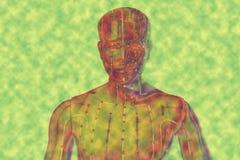人医疗针灸模型黄色的 免版税图库摄影